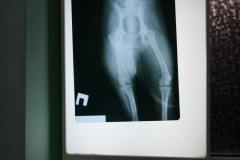 рентген диагностика животных