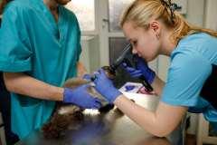 офтальмологическое обследование животных