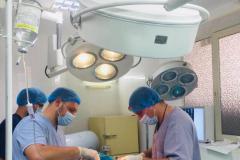 хирургическая помощь животным