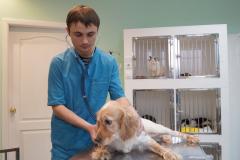 терапевтическое обследование животных