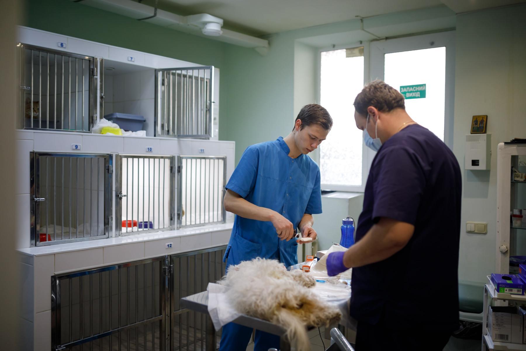 стационар для животных