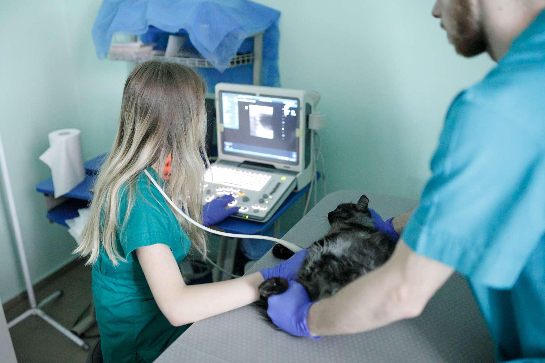 УЗИ диагностика животных