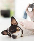 Дерматология животных, заболевания кожи животных