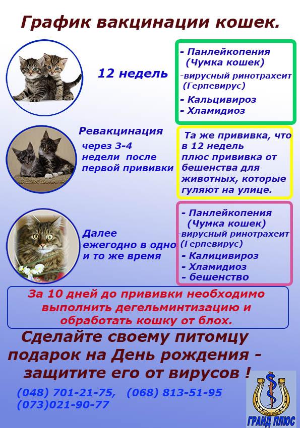 вакцинация кошек, прививки кошкам