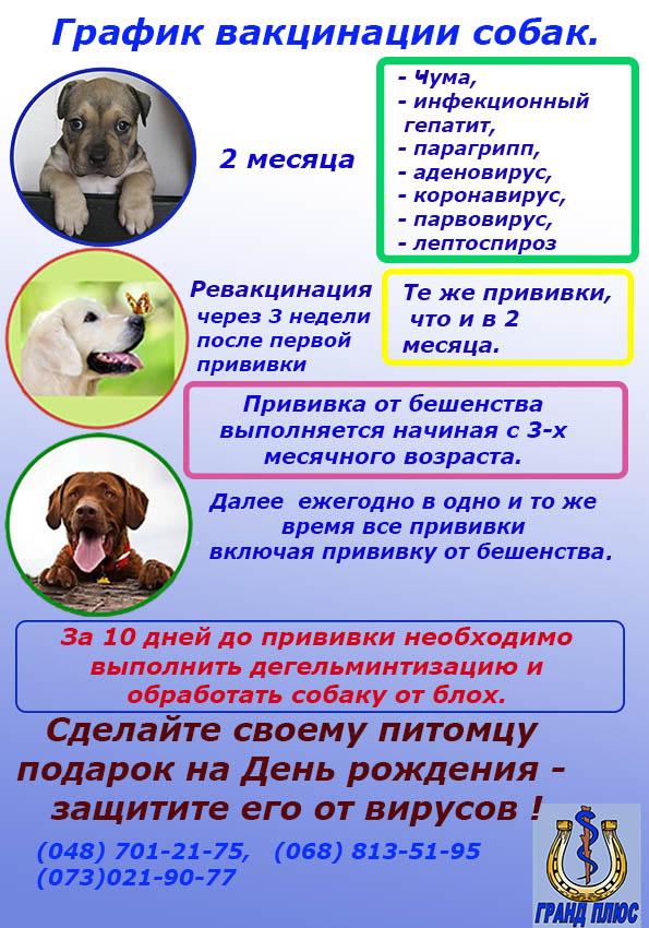 прививки собакам, вакцинация собак