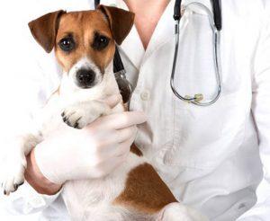 вакансии ветеринара